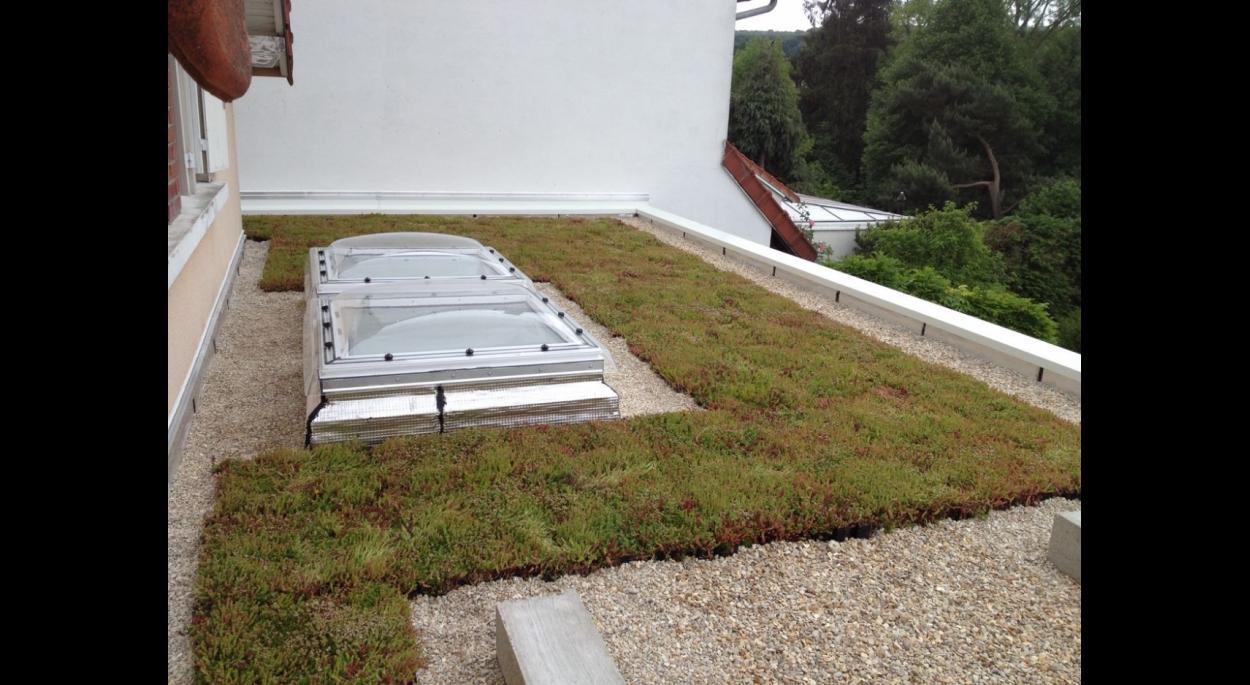 Extension de maison individuelle - Toiture terrasse végétalisée